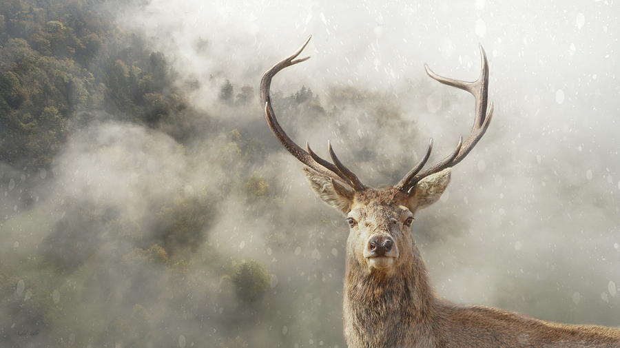 Stag Photograph - Wild Nature - Stag by Andrea Kollo