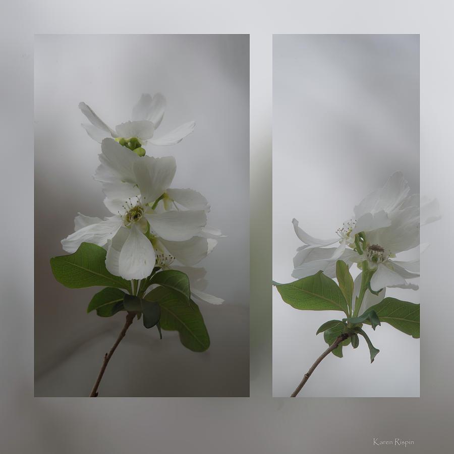 Wild Plum by Karen Rispin