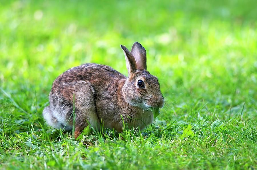 Wild Rabbit by Sharon Talson