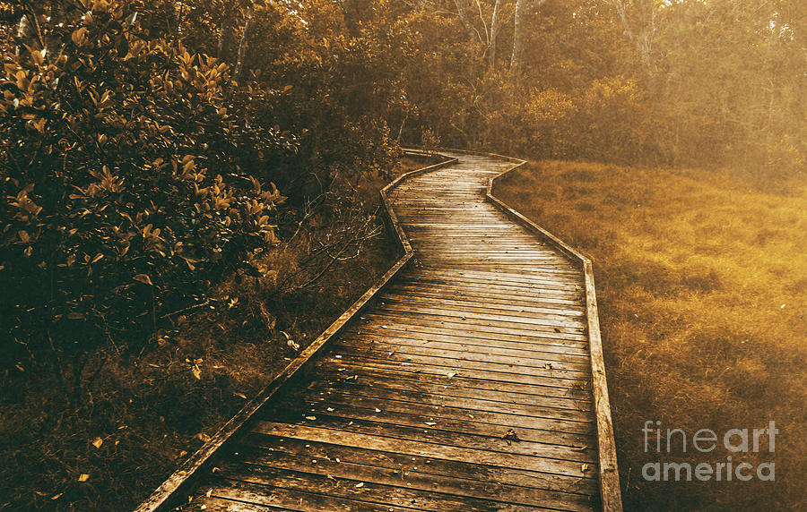 Path Photograph - Wild Routes by Jorgo Photography - Wall Art Gallery