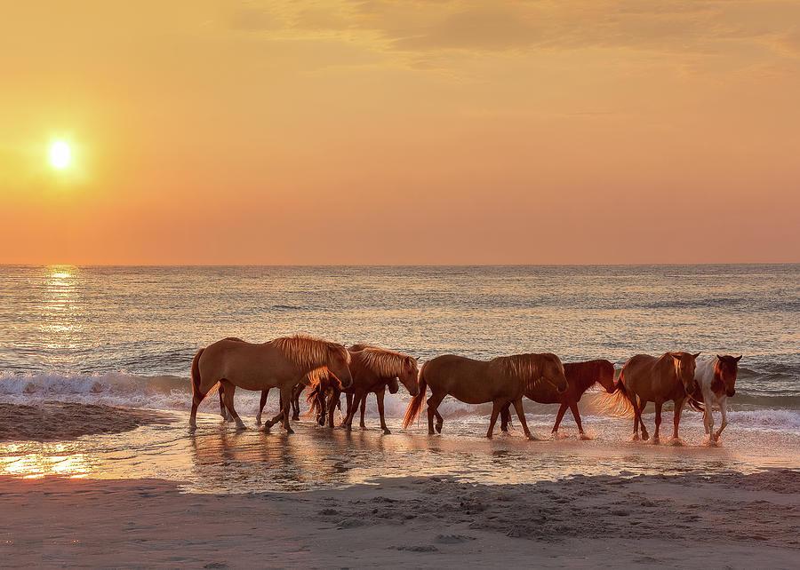 https://images.fineartamerica.com/images/artworkimages/mediumlarge/2/wild-seashore-ponies-of-assateague-island-at-sunrise-md-307-alexander-philip.jpg