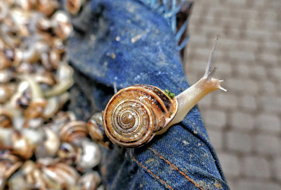 Wild Snails to Go by Photos By Pharos