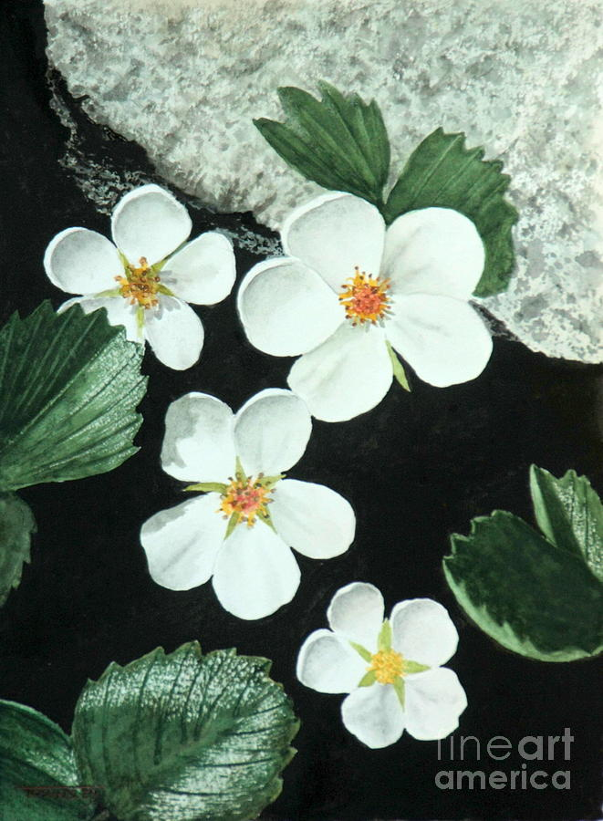 Wild strawberry by Frank Townsley