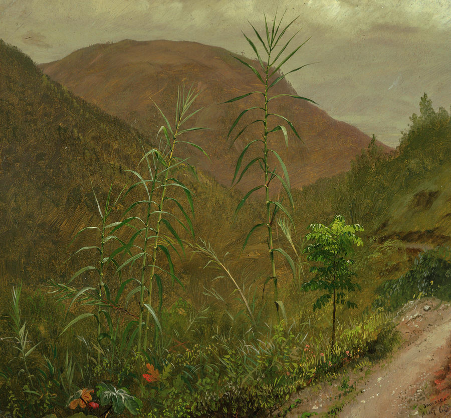 Pichincha Painting - Wild Sugar Cane, Jamaica, 1865 by Frederic Edwin Church