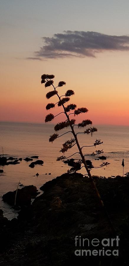 Wild Sunset  by Paola Baroni