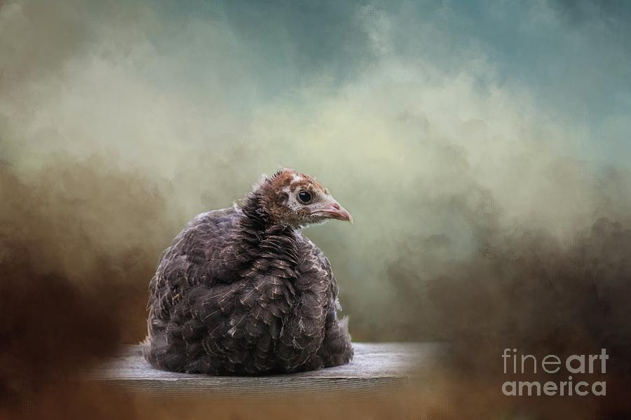 Wild Turkey Chick by Eva Lechner