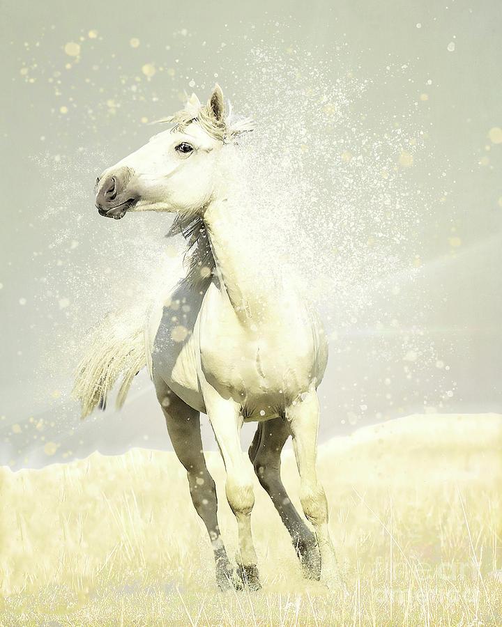 Wild White Horse by Hal Halli