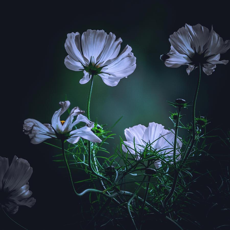 Wild wind Flowers by Bob Orsillo