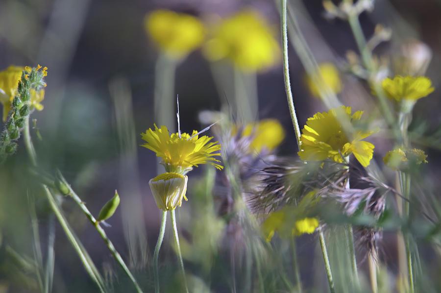 Wilddflowers 7926-042419 by Tam Ryan