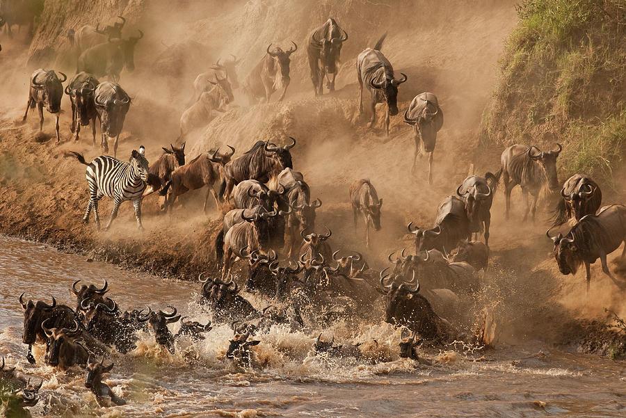 Wildebeest And Zebra Photograph by Marsch1962uk