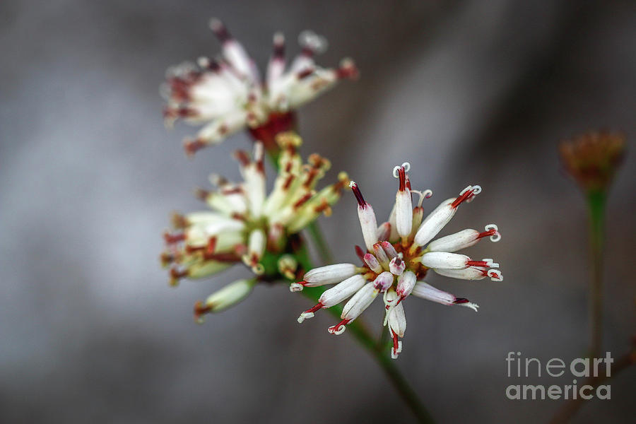 Wildflower at Hawk's Bluff by Tom Claud