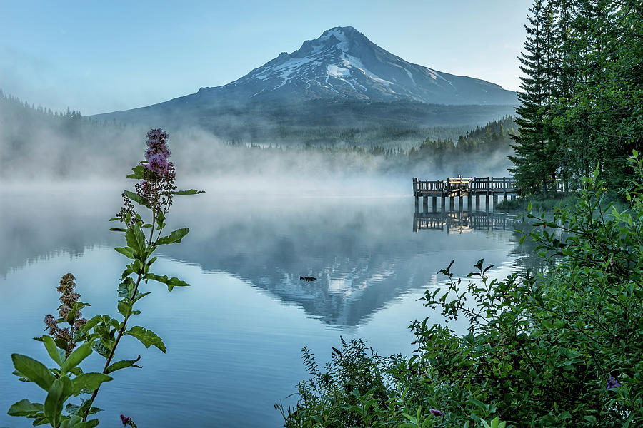 Wildflower at Trillium Lake by Belinda Greb