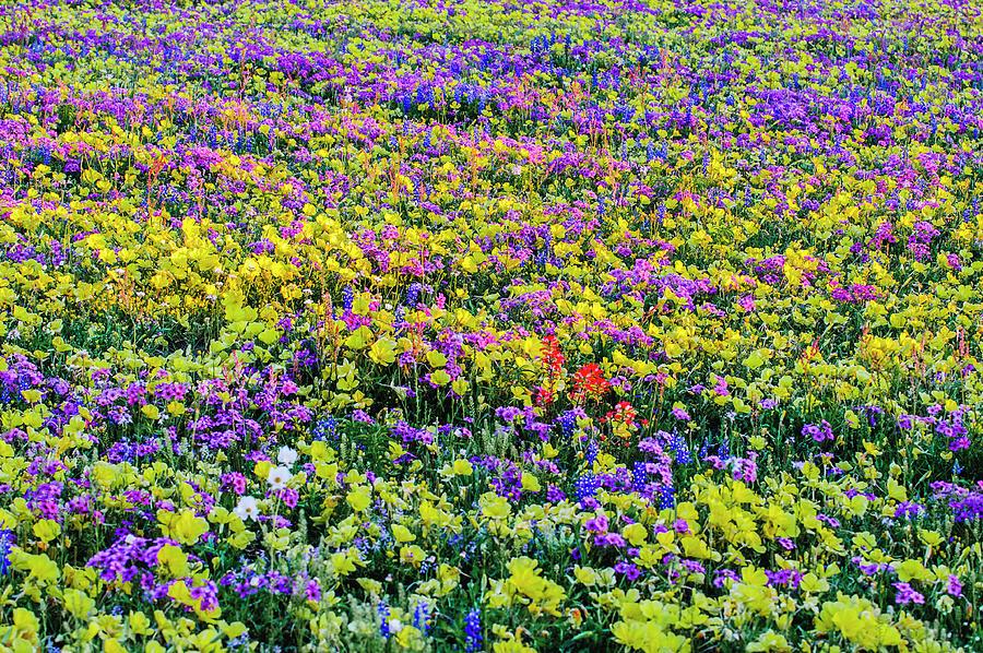 Wildflower Bliss by Johnny Boyd
