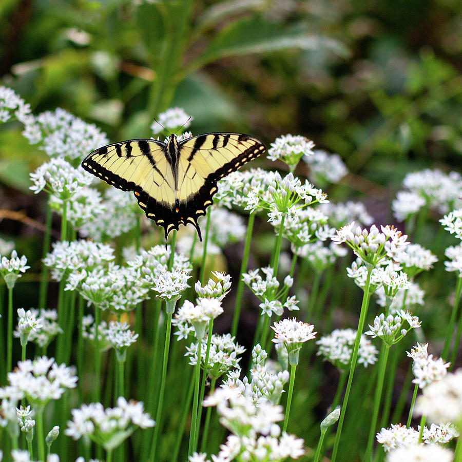 Wildflower Butterfly Photograph by John Daly