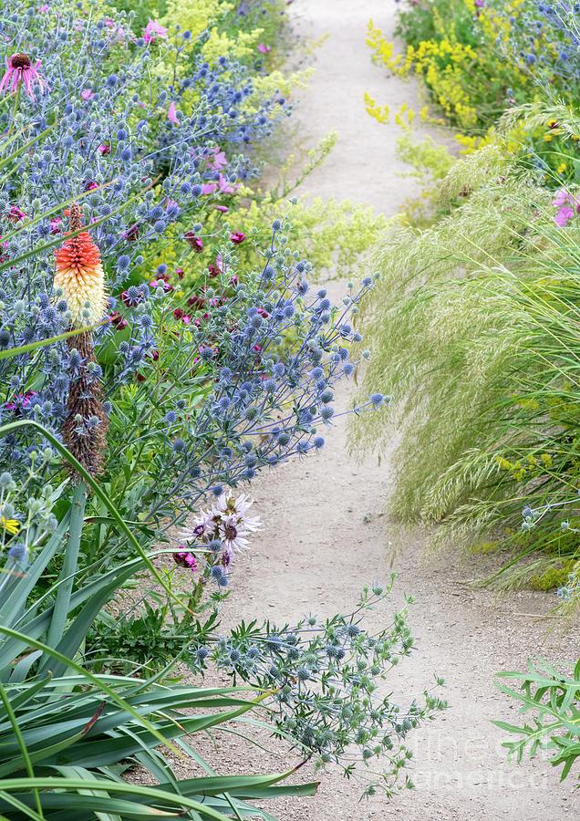 Wildflower Garden by Tim Gainey