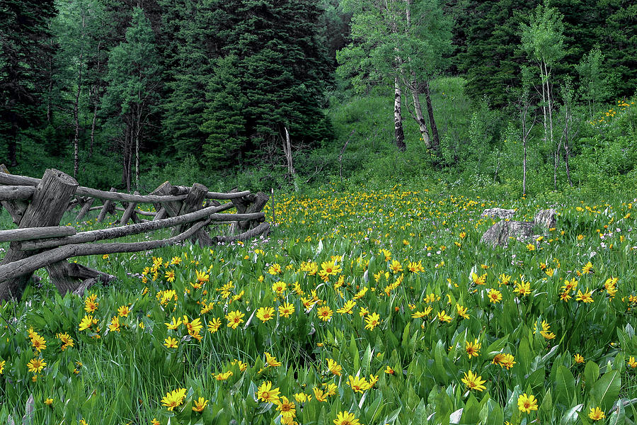 Wildflower Heaven by Ronnie and Frances Howard