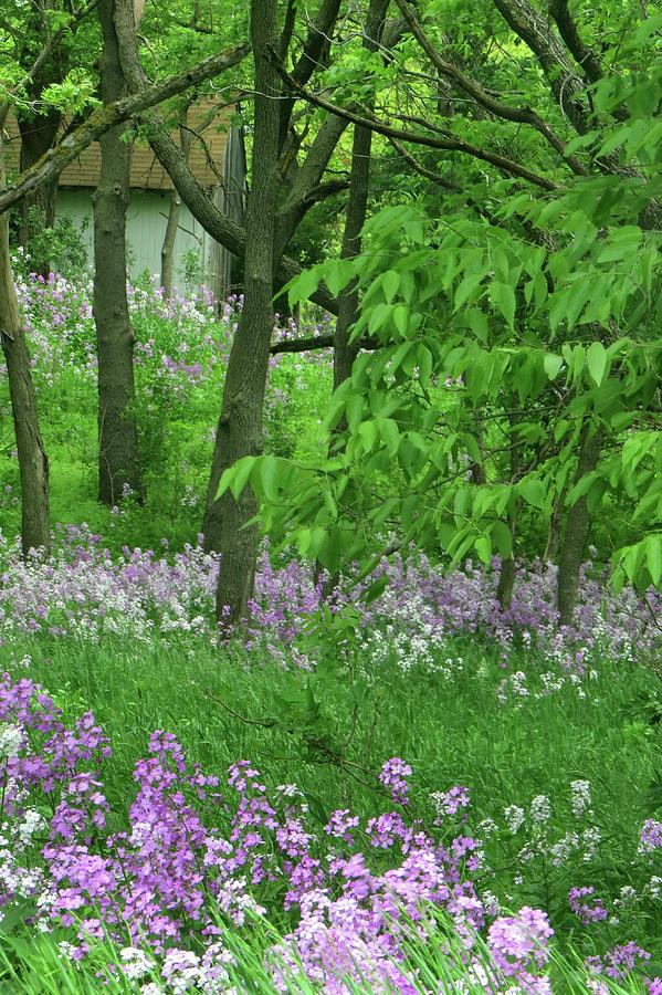 Wildflower Hill by Carolyn Fletcher