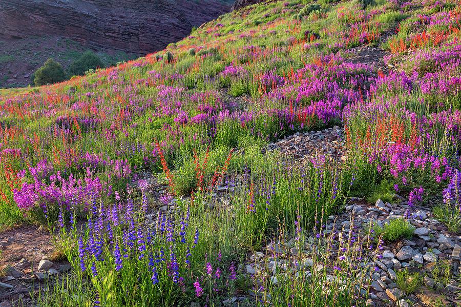 Wildflower Hill by Denise Bush