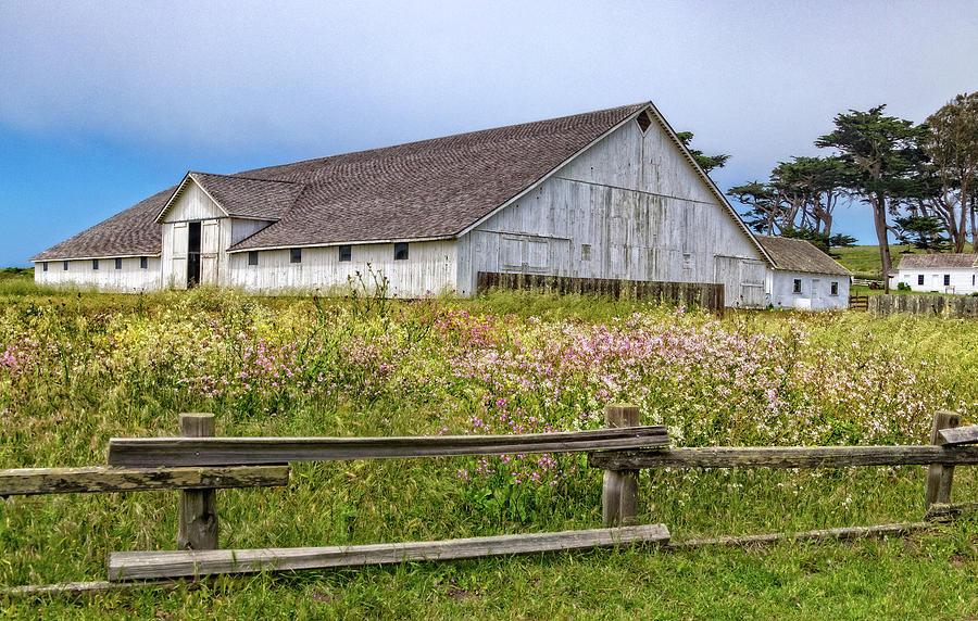 Wildflower Meadow at Pierce Point Ranch by Carolyn Derstine