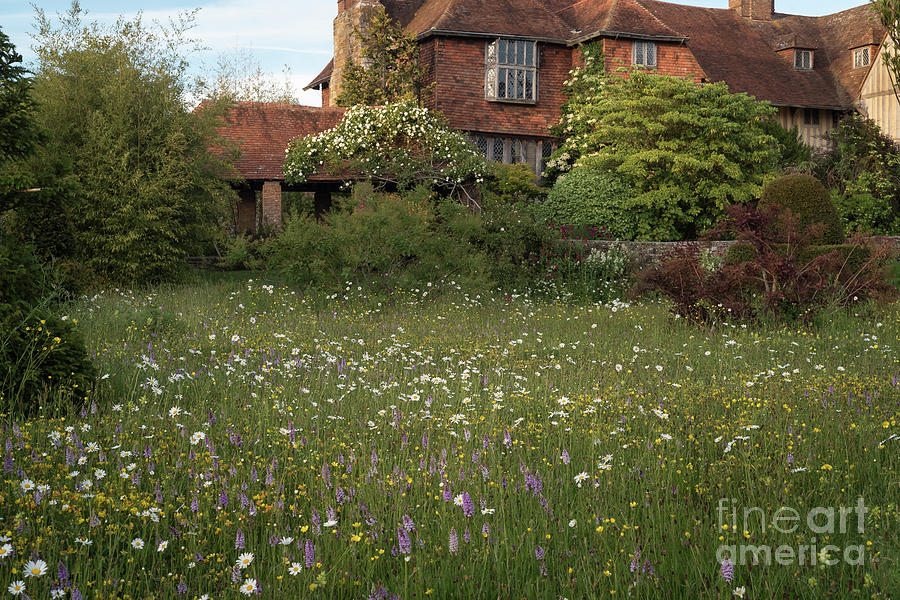 Wildflower Meadow, Great Dixter by Perry Rodriguez