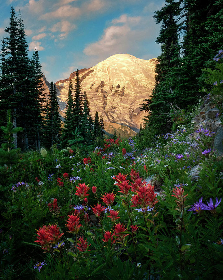 Wildflower Morning on Mount Rainier by David Soldano