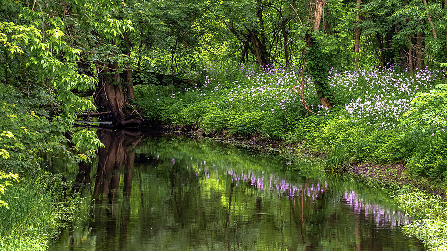 Wildflower Reflections by Rod Best