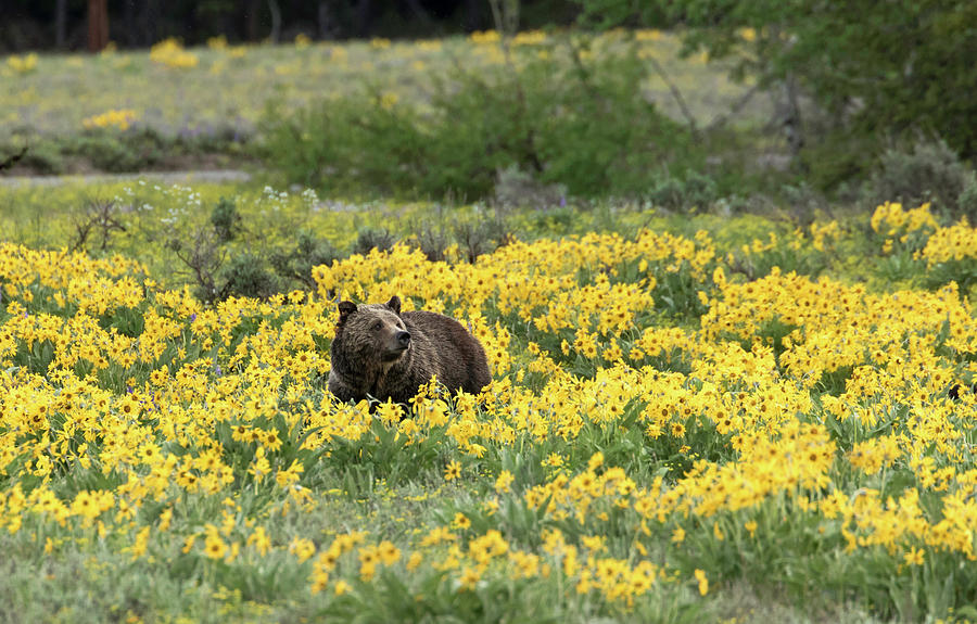 Wildflowers and a Bear by Ronnie and Frances Howard