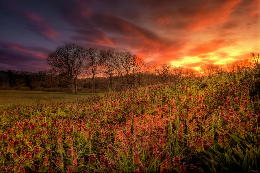Wildflowers and Wildfire Sky by Thomas Gaitley