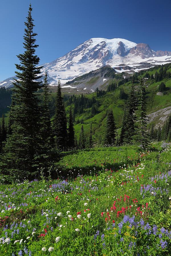 Wildflowers At Mount Rainier Photograph by Jonkman Photography