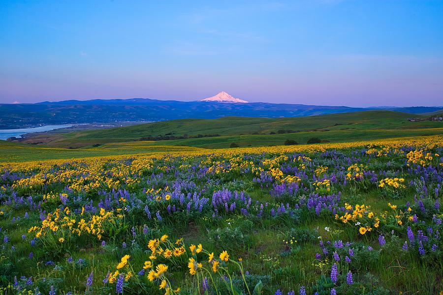 Wildflowers at sunrise by Lynn Hopwood
