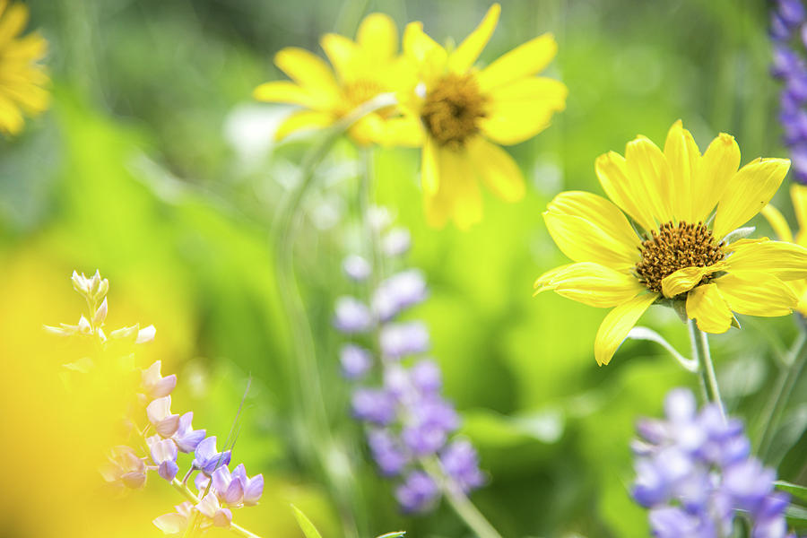 Wildflowers at Tom McCall Nature Preserve by Johanna Froese