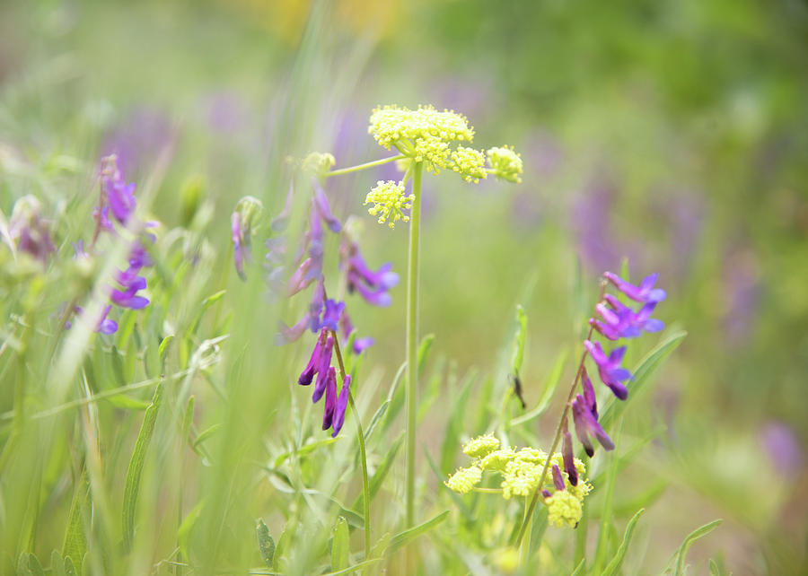 Wildflowers at Tom McCall Preserve by Johanna Froese