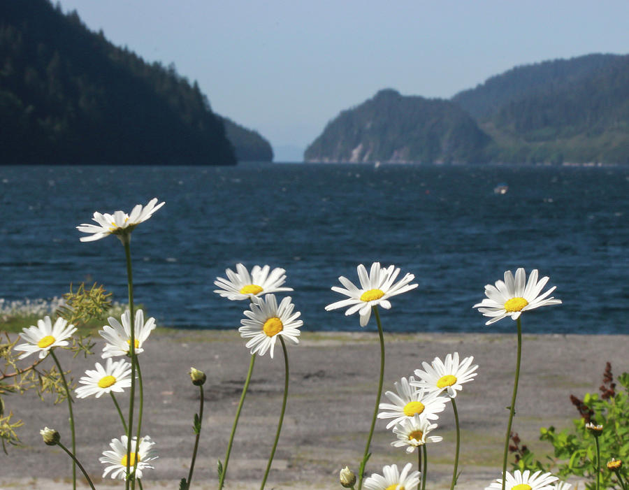 Wildflowers Before a Mountainous Inlet by Pacific Northwest Sailing