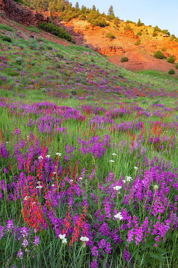 Wildflowers Beside Glowing Ridge by Denise Bush