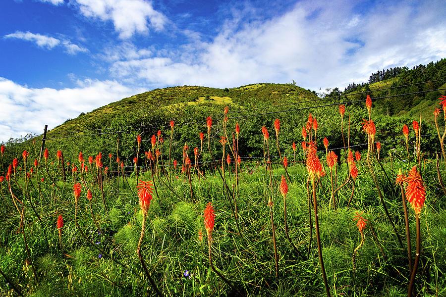 Wildflowers by the Fence by Carolyn Derstine
