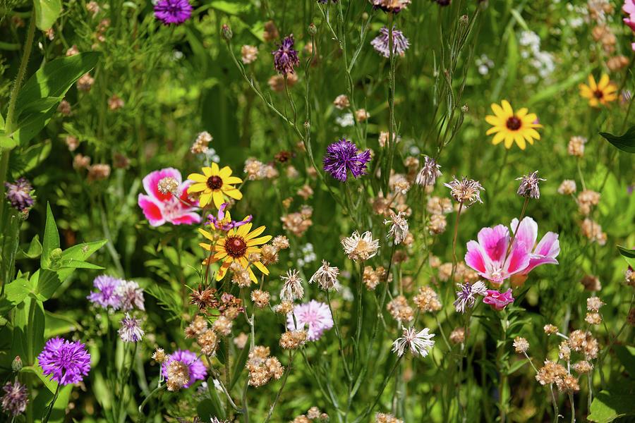 Wildflowers Photograph - Wildflowers by John Heywood