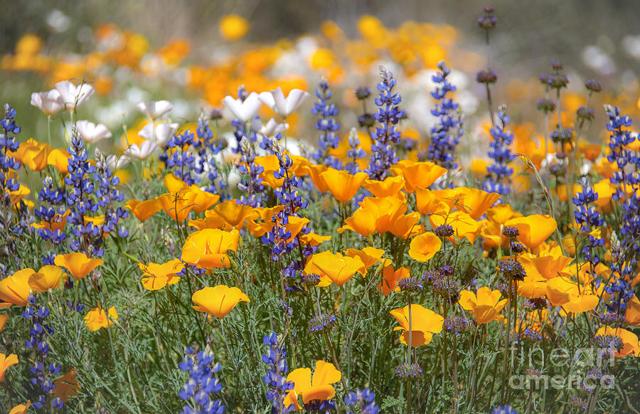 Wildflowers in Bloom by Lisa Manifold