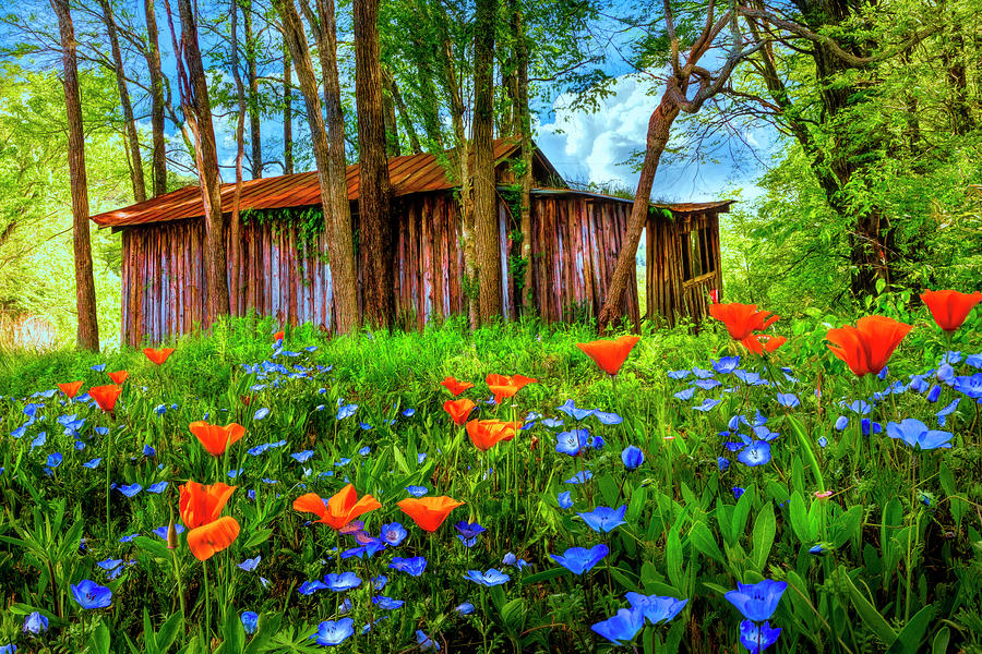 Appalachia Photograph - Wildflowers In The Country by Debra and Dave Vanderlaan