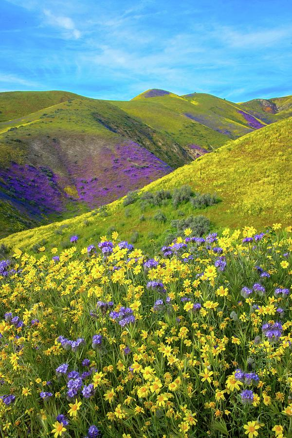 Wildflowers in the Temblors - Superbloom 2019 by Lynn Bauer