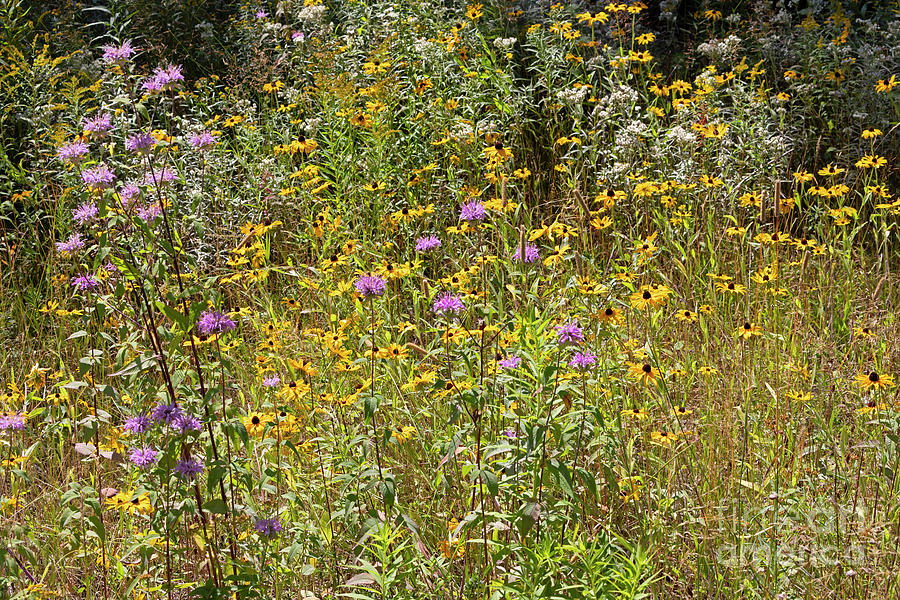 Wildflowers near the Trans Canada Highway in Northern Ontario by Louise Heusinkveld