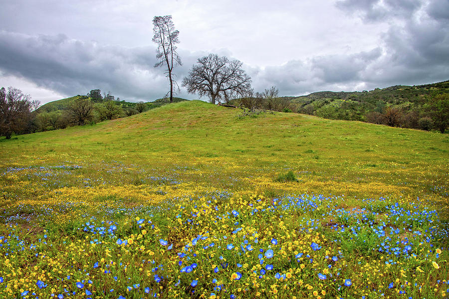 Wildflowers on a Cloudy Day - Superbloom 2019 by Lynn Bauer