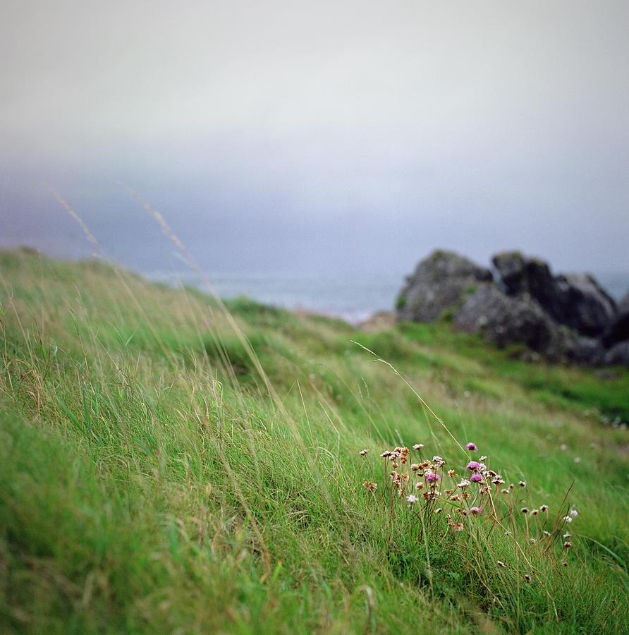 Wildflowers On Green Hillside Under Photograph by Danielle D. Hughson