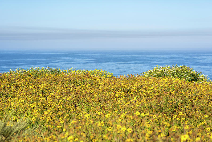 Wildflowers On The Edge Of The Sea by Joseph S Giacalone