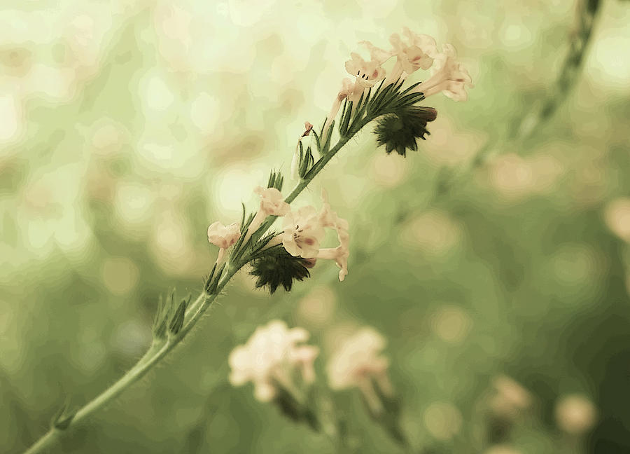 Wildflowers by Robert Blandy Jr