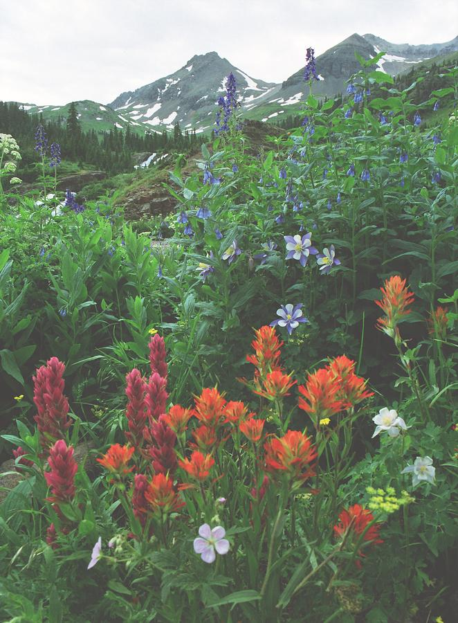 Colorado Wildflowers Photograph - Wildflowers, Yankee Boy Basin, Colorado by Steve Tohari