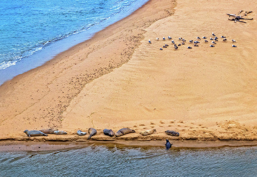 Wildlife on Pescadero State Beach by Carolyn Derstine