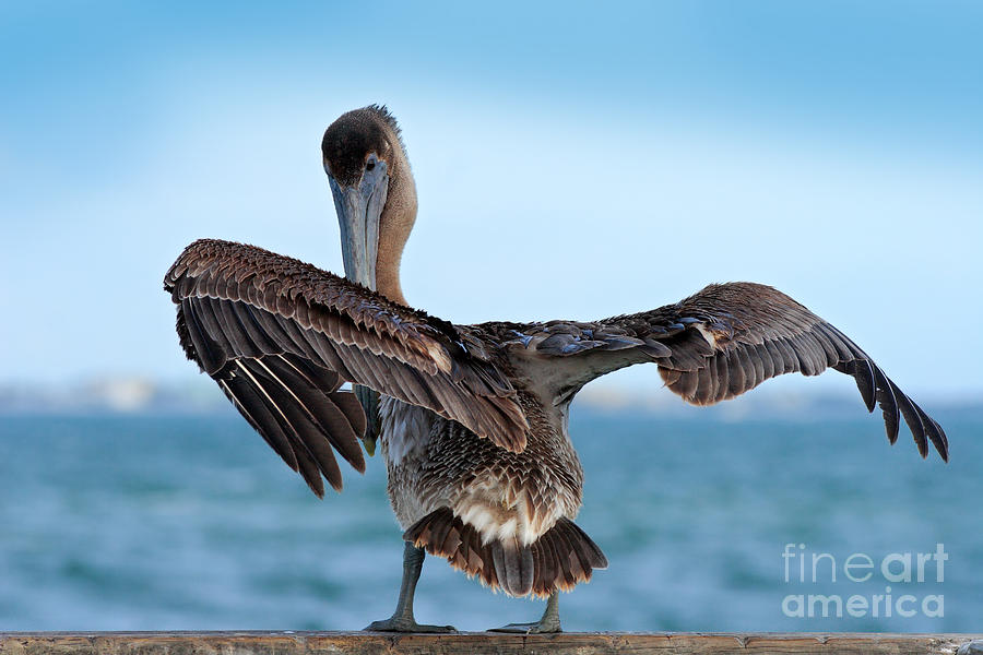 Feather Photograph - Wildlife Scene From Ocean. Brown by Ondrej Prosicky