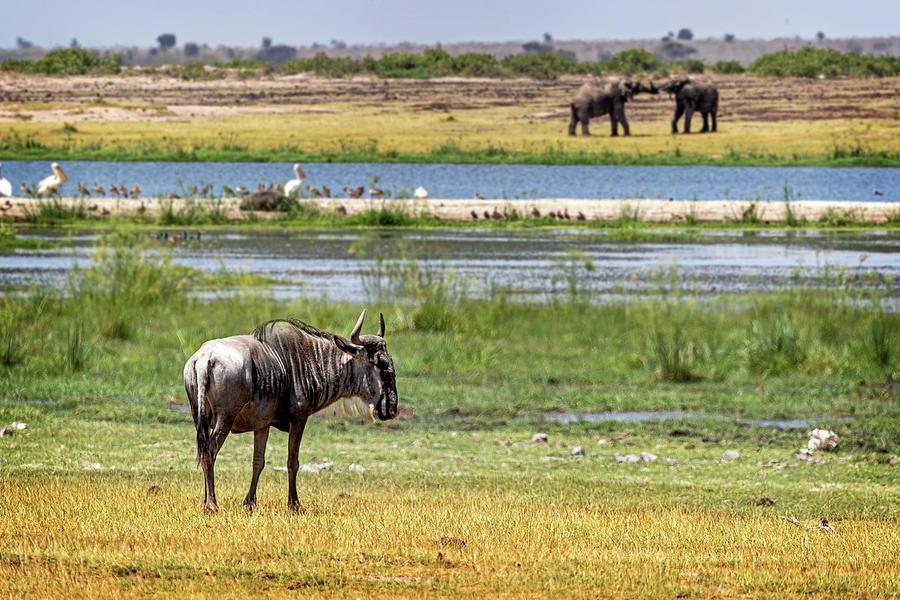 Wildlife Wetlands by Susan Schmitz