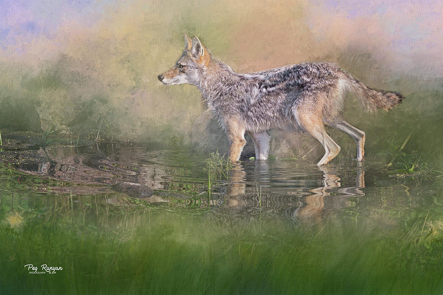 Wiley Coyote by Peg Runyan