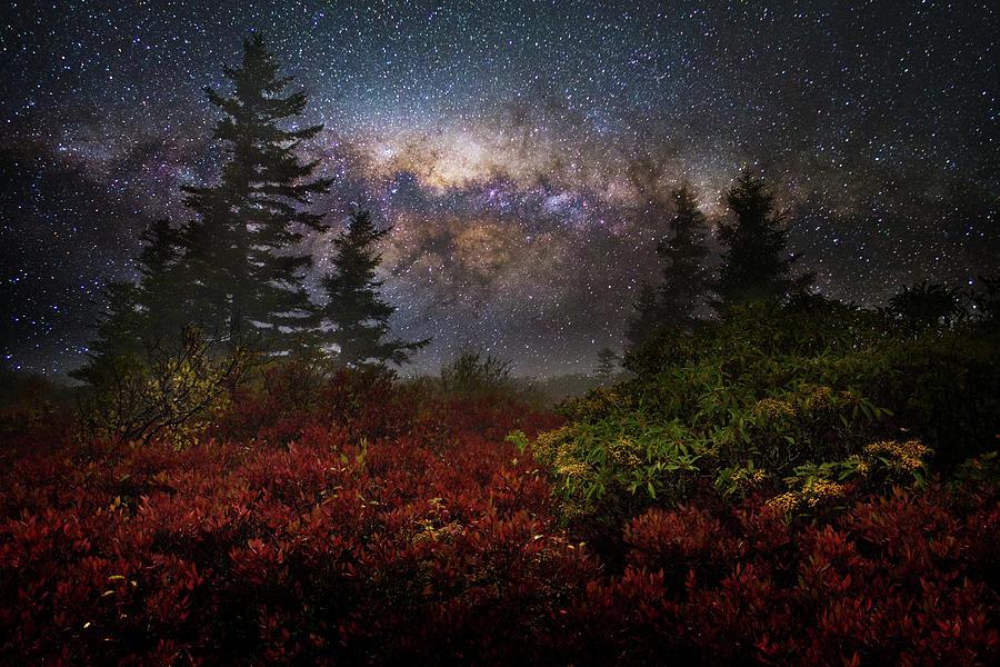 Will of Night by Lj Lambert